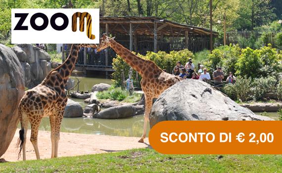 Zoom Torino